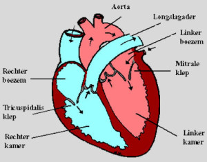 cardiomyopathie2